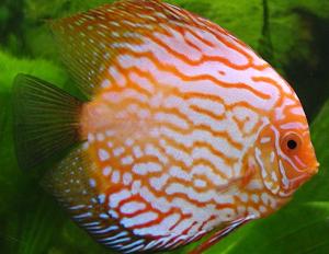 vendita di pesci tropicali a torino